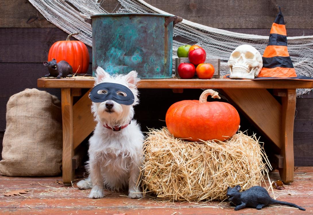 Fall dog.jpg