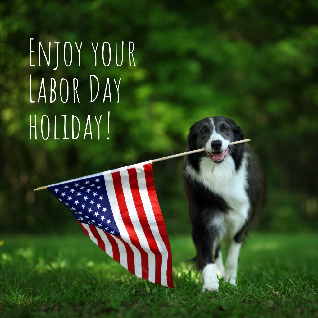 happy-border-collie-carrying-usa-flag-picture-id978651798.jpg